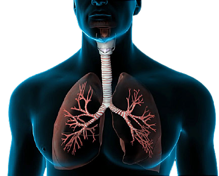 Homeopathy Treatment for Lungs