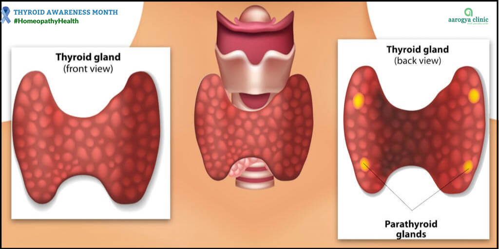 Thyroid | Homeopathy For Thyroid Disorders In India